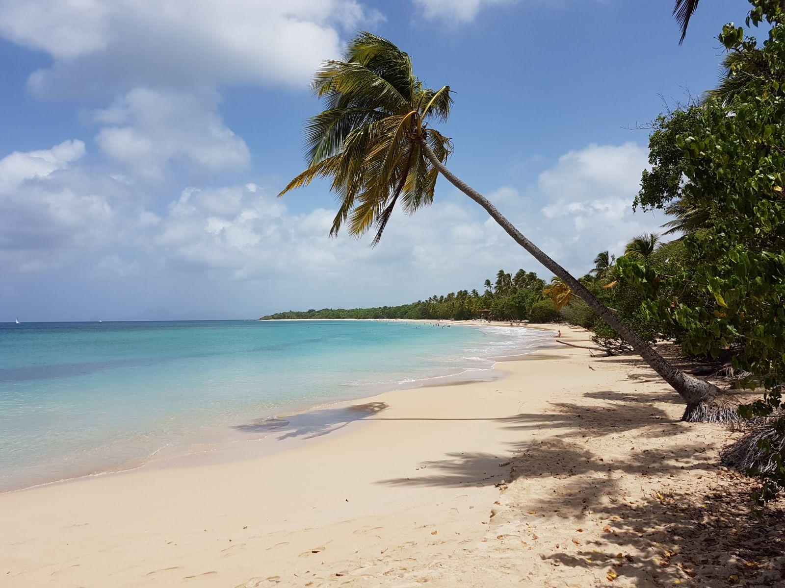 Plage des Salines Martinique